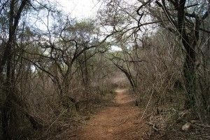 Kwa-Ximba Trail Run Route - Bush Track